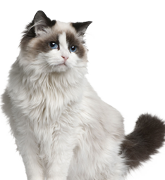 Royal Canin Urinary So Cat Food Coupons