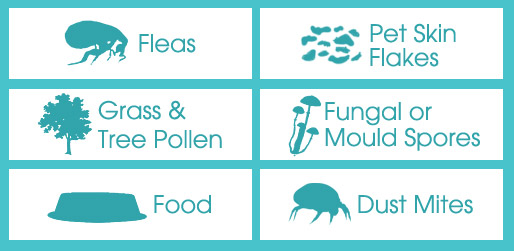 Causes for Allergies
