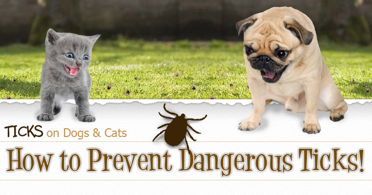 How to Prevent the Danger from Ticks!
